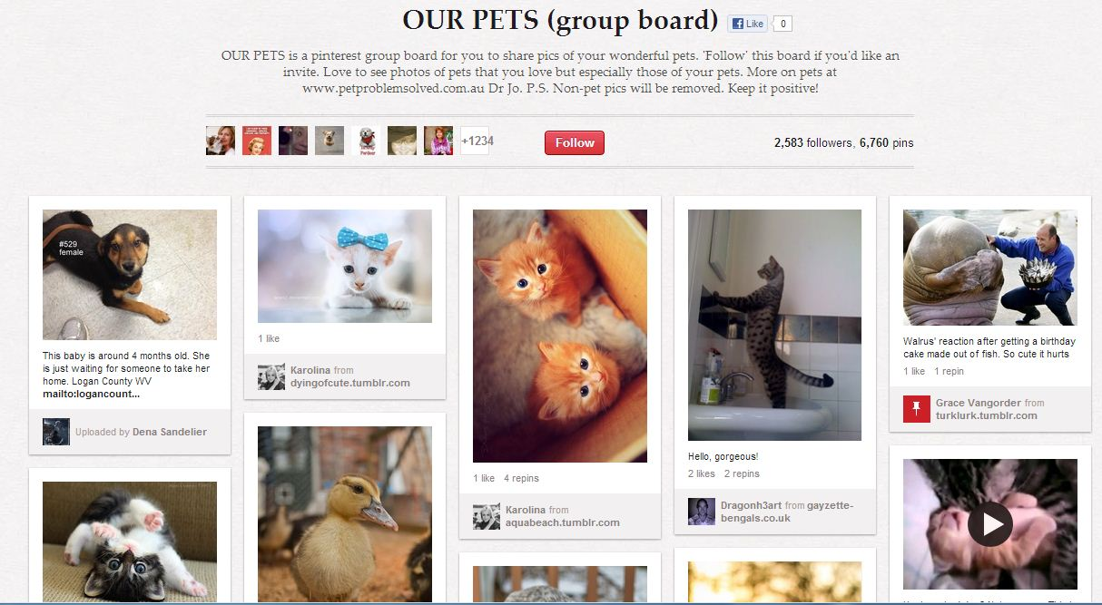 sidney group boards our pets succes